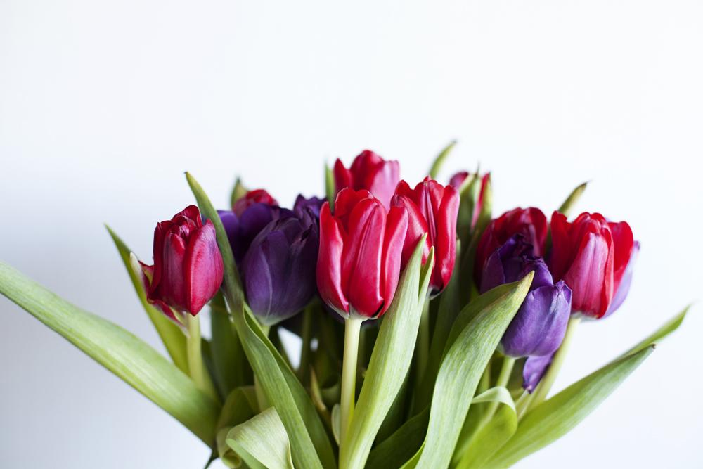 Blommor02